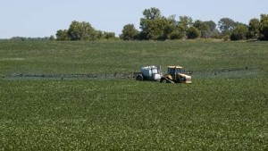 Consider Economics First Before Spraying Fields For Aphids Or Weeds