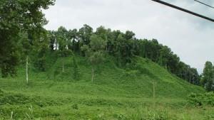 Kudzu: Where The Wild Things Are