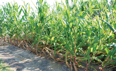 Crop Protection: Just Getting Better