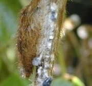 FMC Corp. Expands Fungicide Portfolio