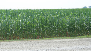 Largest Corn Waste-To-Ethanol Plant Opens In Iowa