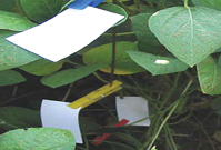 Soybean Canopy Water Sensitive Paper