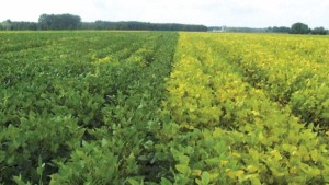 Anthem Herbicide Now Available For Soybeans