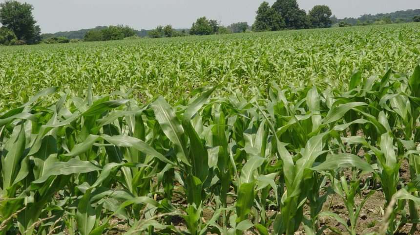 Study: Sensors Outdo Farmers At Choosing Nitrogen Rates