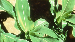 Micros Ease Crop Stress