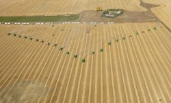 Tiger 90CR Sulfur Field