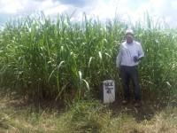 Sugarcane Wolf Trax DDP Micronutrients