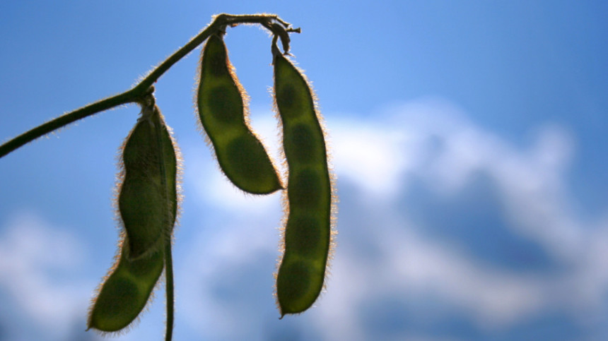 Monsanto, FMC Expand Roundup Ready PLUS Platform