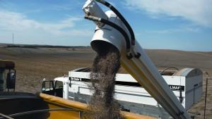 Green Lights Abound For Fall Fertilizer