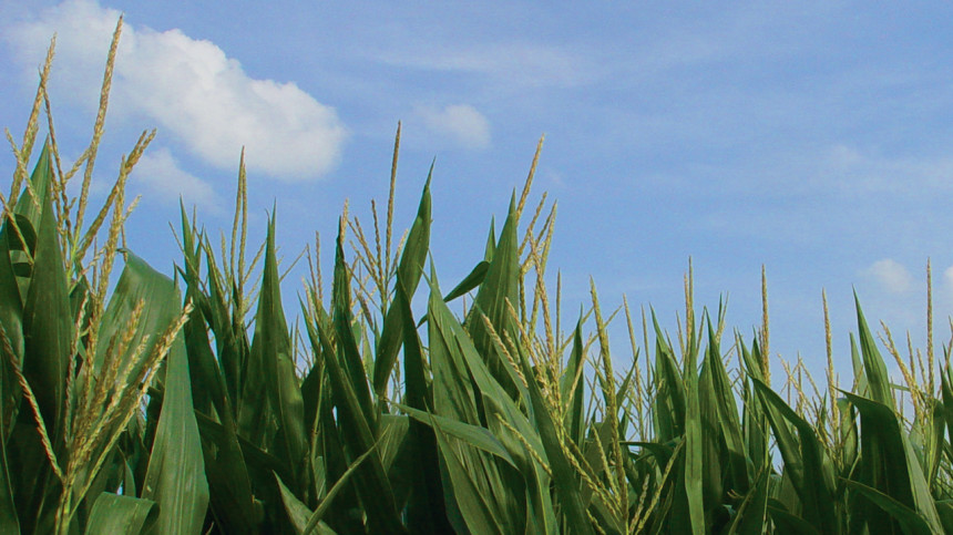 NCGA Questions Study On Climate And Corn Yield
