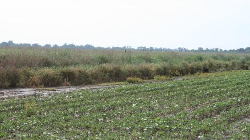 Warm Grass Field Buffer