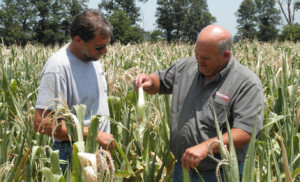 Mike Wilson (right) and Illinois farmer John Haase make decisions on drought damaged corn. Southern Illinois is experiencing its worst drought in 76 years.