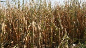 Fall Fertilizer Outlook: A Heated Debate