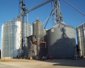 A 550,000 bushel bin at Ostrander Farmers Coop's Wykoff, MN location.