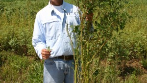 Study: Zero Tolerance Needed In Management Of Glyphosate-Resistant Palmer Amaranth