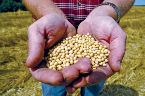 A Missouri farmer holds biotech soybean seed before planting in the summer of 2008.