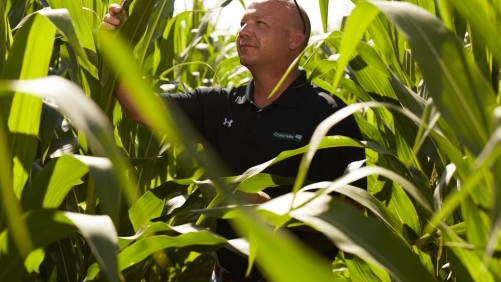 Crystal Valley Coop's Gary Spence scouts in a field of corn.