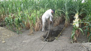 Factors To Consider When Placing Fertilizer With Seed