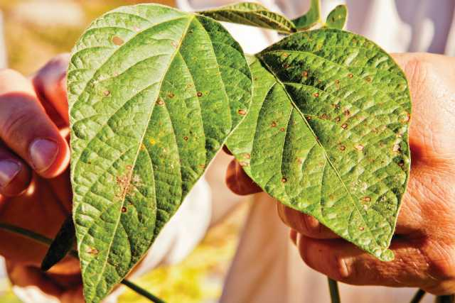 Make The Case For Fungicides In 2014