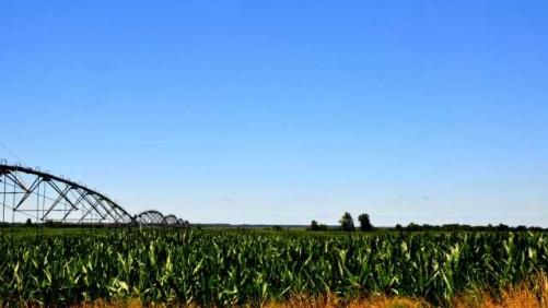 Missouri Corn Field