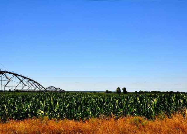 Economist: El Niño Could Benefit U.S. Agriculture