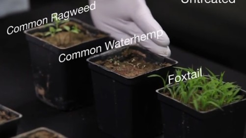 BASF weed resistance study