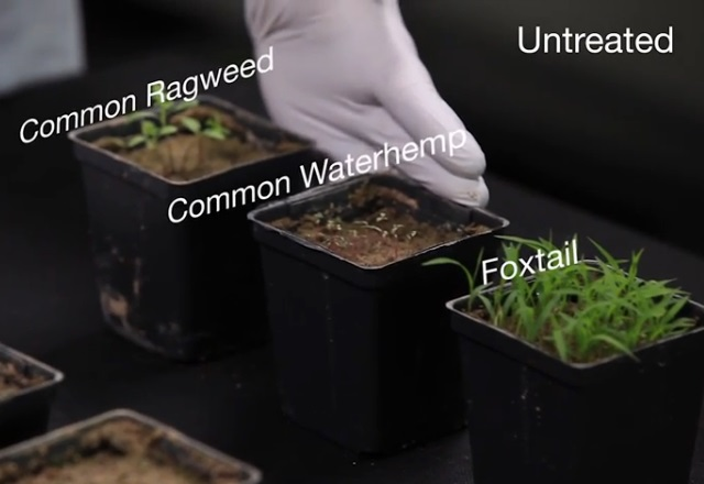 Study: Preemergence Herbicides With Multiple Sites Of Action Critical For Optimal Control