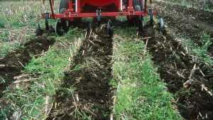 Managing Plant Nutrients When Both Manure And Fertilizer Applications Are Used