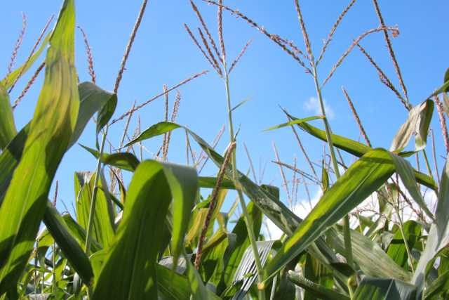 Ag Industry Comes Together To Address Climate Change
