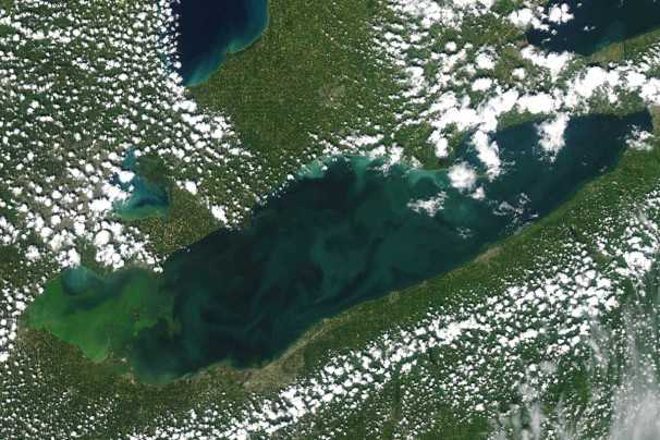 CCAs Making Headway With 4R Program In Lake Erie Western Basin