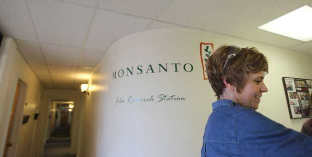Monsanto Herbicide-Tolerant Technology Closer To Commercial Launch