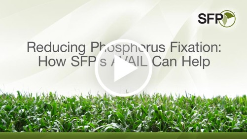 SFP Reducing Phosphorus video screen capture
