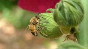 EPA: Let's Talk Imidacloprid, Bees On February 18