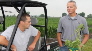 Purdue: Late Season Weeds May Require Manual Removal