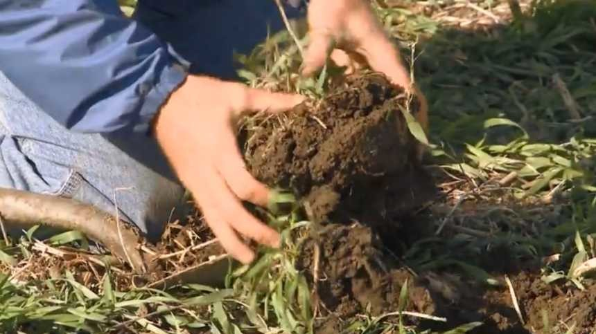 Cover Crops Field Guide For Farmers Expanded