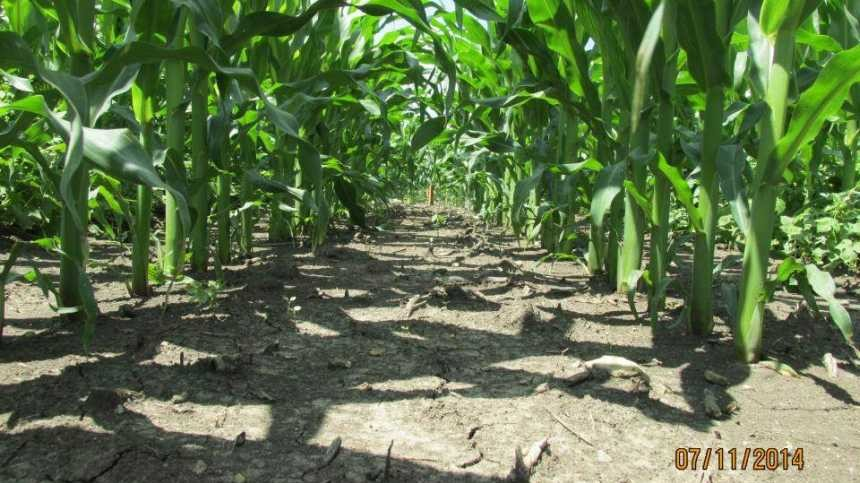 Syngenta Announces Acuron Trial Plot Results