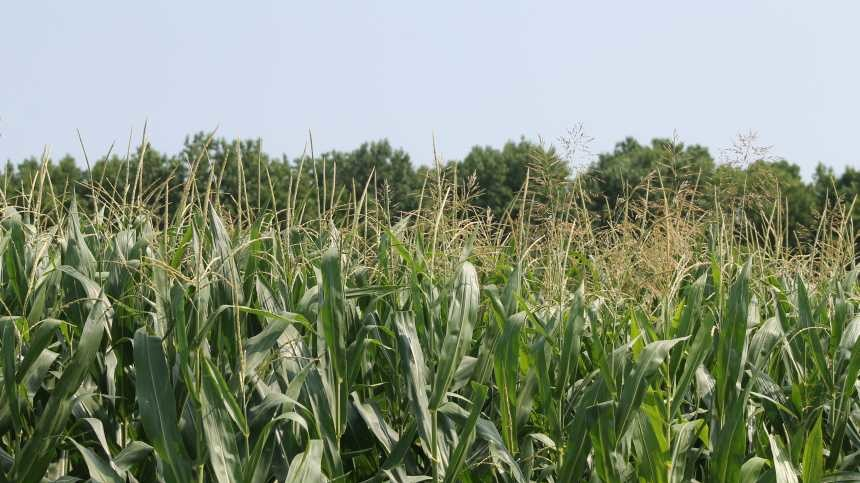 Vestaron's Bioinsecticide Now Registered For Use On More Crops And Insects