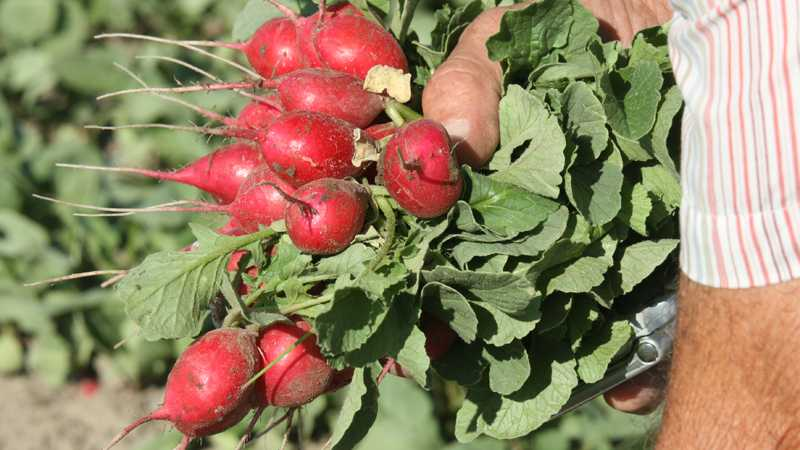 Cooperative Extension Offers Good Agricultural Practices Training