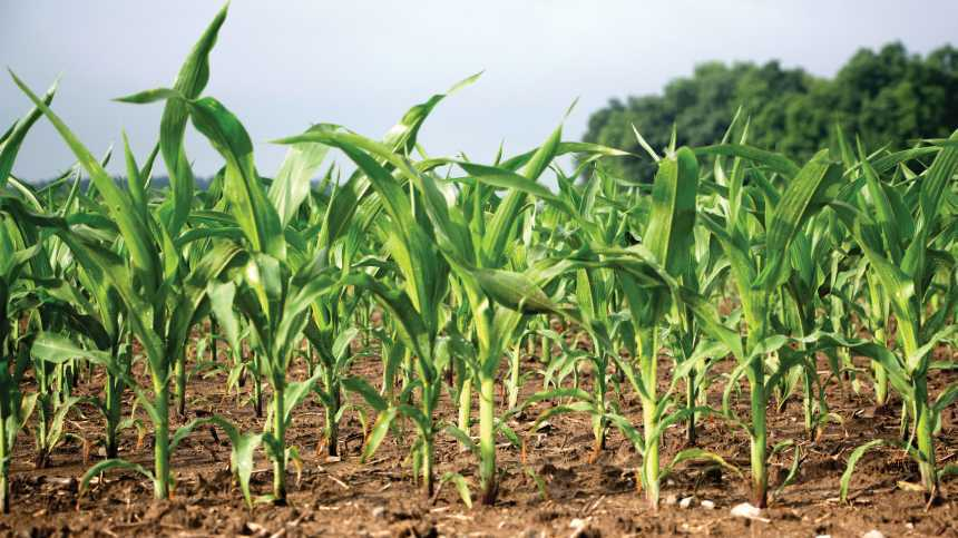 Crop Nutrition Special Report: Maximizing Yield & Managing Costs