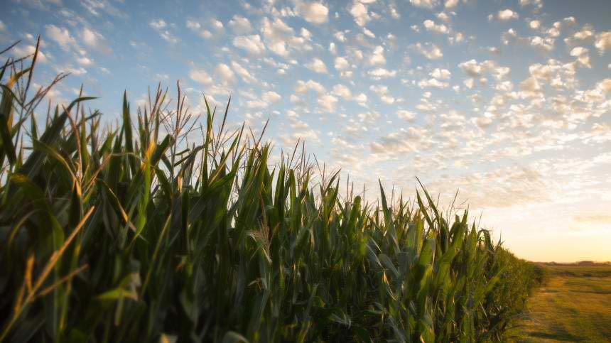 Monsanto Invests $1.6 Million In System To Quantify Greenhouse Gas Reductions