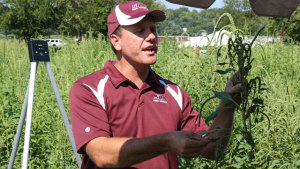 Study Evaluates Herbicide Application Timing in New Soybean Cropping Systems