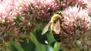 USDA, NASS Launch Beekeeper Survey