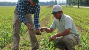 Scouting, Soil Checks Gaining Value