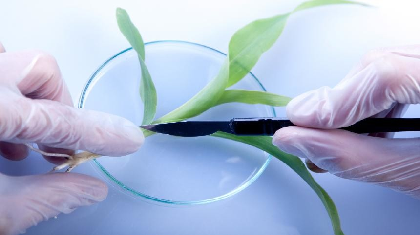 Plant Tissue Analysis Is Good Medicine For Crops