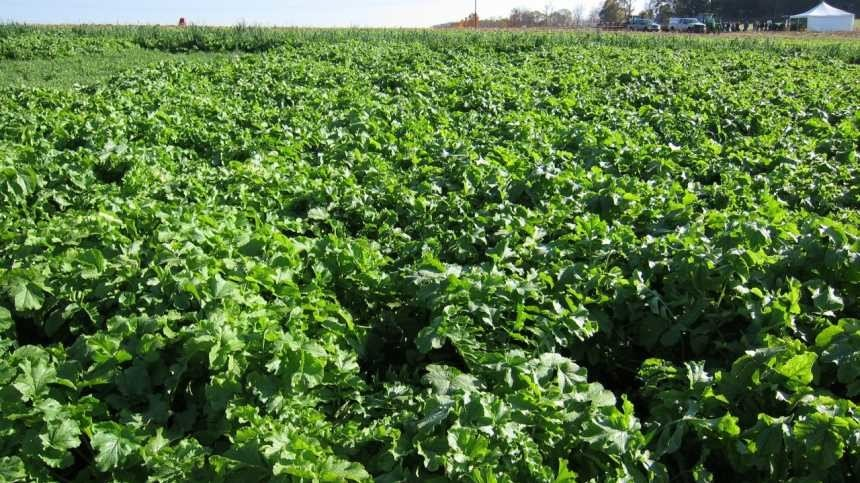 Cover Crops' Part In Protecting Water