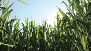 Challenging Global Economic Conditions Putting More Heat On U.S. Ag Retailers
