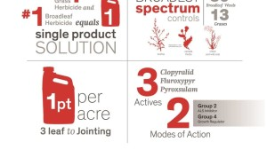 Dow AgroSciences Introduces New Spring Wheat Herbicide