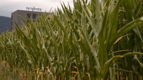 Syngenta plant