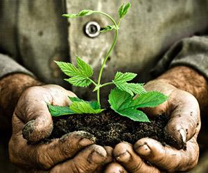 plant-hand_300x250