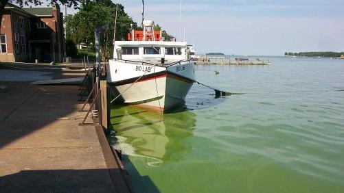 Lake Erie algal bloom 2015
